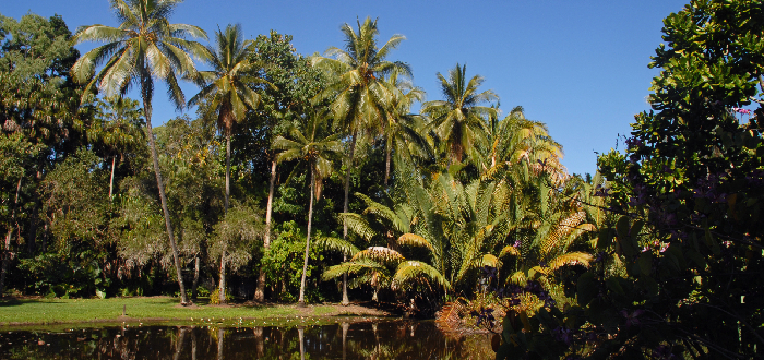 botanic cairns | Qué ver en Cairns