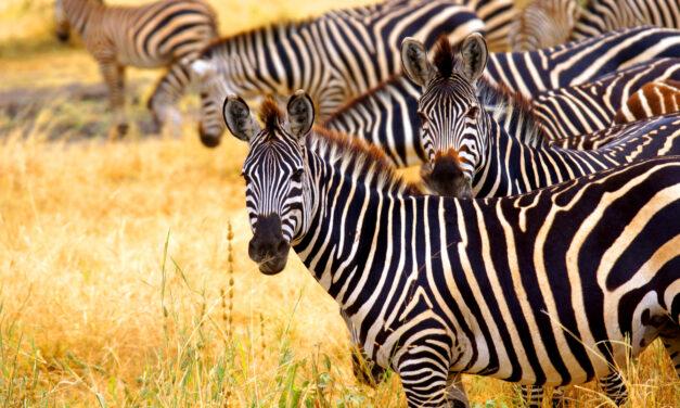 Qué ver en Nairobi | 10 Lugares Imprescindibles