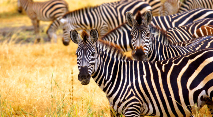 Qué ver en Nairobi. 10 Lugares Imprescindibles