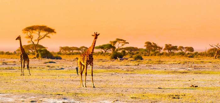 Qué ver en Kenia: Parque Nacional de Amboseli