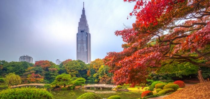 Por qué Tokio es una de las ciudades más sorprendentes.