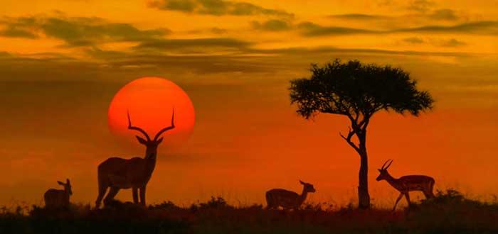 Qué ver en Kenia | Parque Nacional de Tsavo West