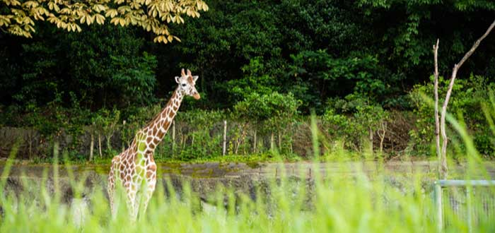 Zoológico y Jardín Botánico Higashima