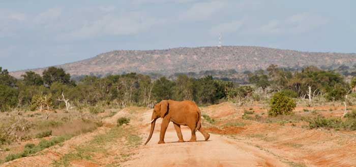 Parque Nacional de Tsavo East