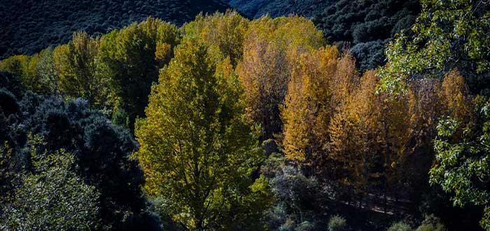 bosque encantado paisajes emblematicos de granada