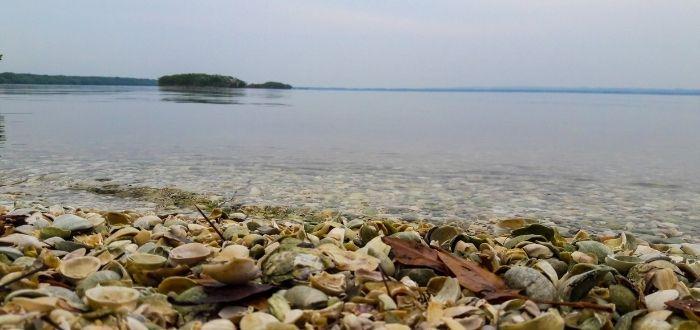 Qué ver en Veracruz: Laguna de Mandinga