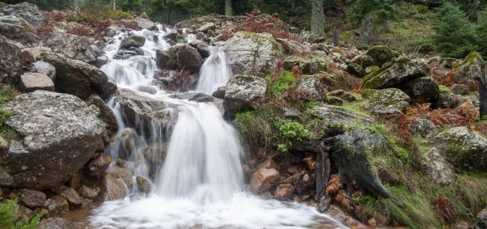 Paraje Natural Los Reales de Sierra Bermeja