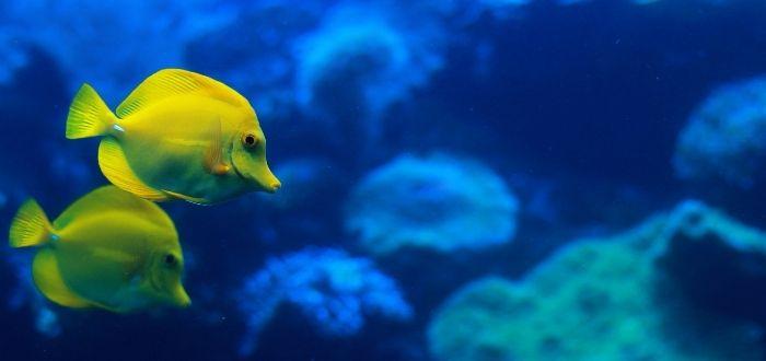 Palma Aquarium | Que ver en Palma de Mallorca
