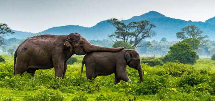safaris en sri lanka