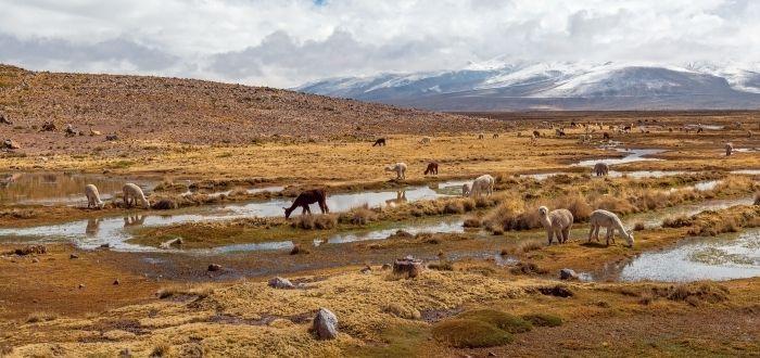 Reserva Nacional de Salinas y Aguada Blanca | Que ver en Arequipa