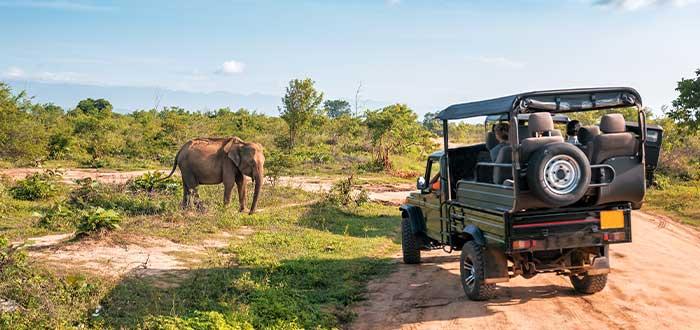 contratar servicio de safari en kenia