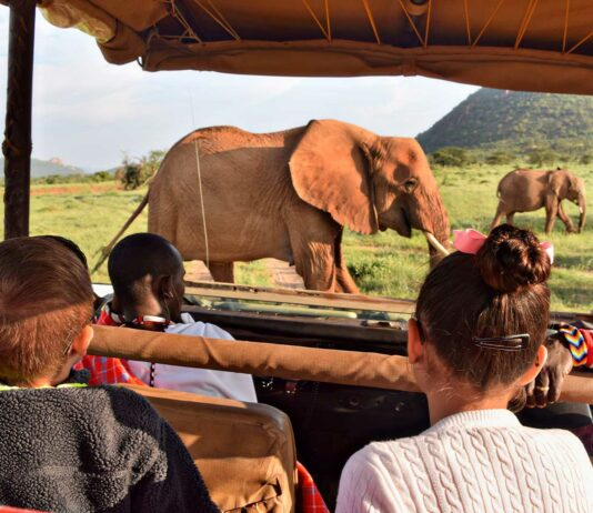 pasos para hacer un safari en kenia
